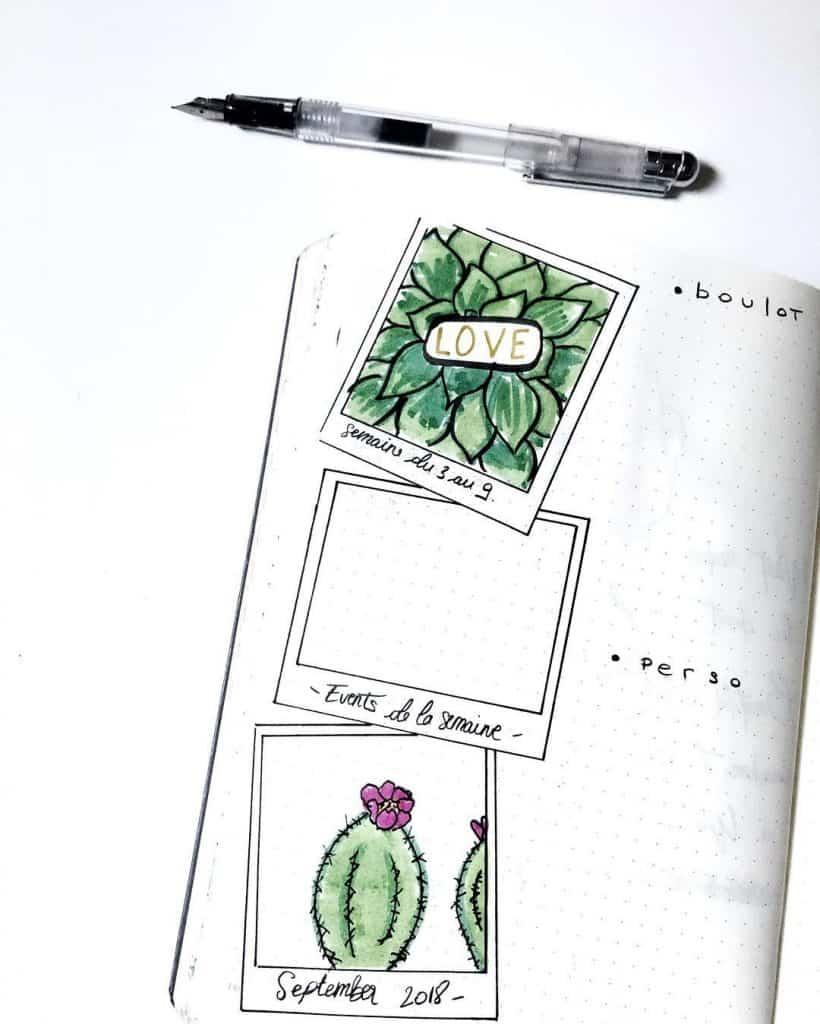 Cactus spreads